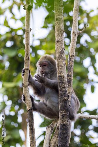 Valokuva  Image of a monkey on the tree on nature background. Wild animals