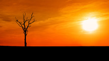 Silhouette Dead Tree On Sunset