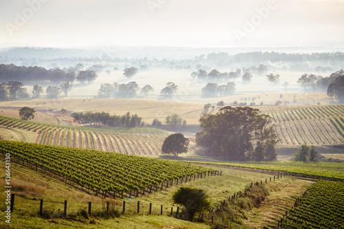 Wall Murals Vineyard Sunrise across Hunter Valley vineyards