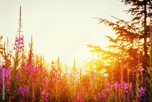 Fotografie, Obraz  Wildflowers at sunset