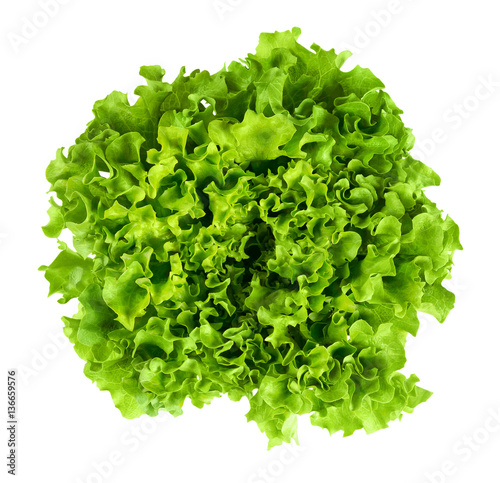 Batavia head of lettuce from above on white background. Also French or summer crisp. Fresh bright green salad head with crinkled leaves and a wavy leaf margin. Isolated macro food photo close up.