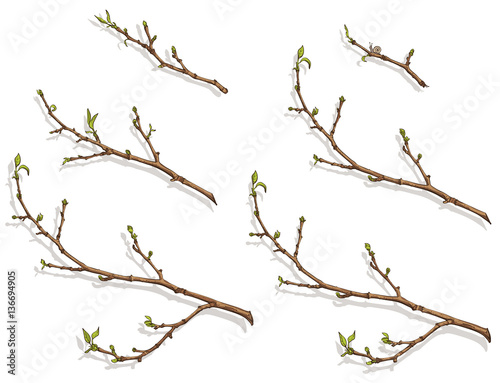 Fotografía  tree branches with buds and leaves