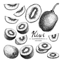 Kiwi Hand Drawn Collection By Ink And Pen Sketch. Isolated Vector Design For Fruit And Vegetable Products And Health Care Goods.