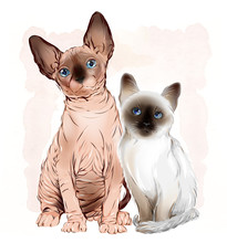 Portrait Of The  Canadian Sphinx Cat And Thai Kitten On The Wate