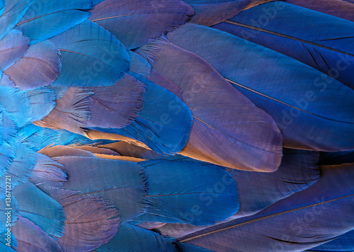 Photo sur Aluminium Aquarelle avec des feuilles tropicales Close up of blue and yellow macaw bird's feathers