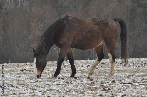 Fotografía  Pferd im Winter