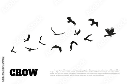 Black silhouette of a crow on a white background. Raven isolated Fototapeta