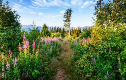 Fényképezés  Mountain trail leading between wildflowers