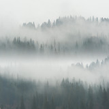 Beautiful Fog in Forest - 136733136