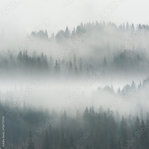 Foto op Aluminium Heuvel Beautiful Fog in Forest