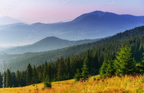 Fototapeten Wald Fantastic sunset in the mountains of Ukraine.