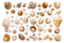 Pattern Of Exotic Seashells. I...