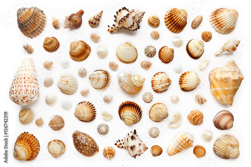 Cuadros en Lienzo pattern of exotic seashells. Isolated on white