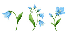 Vector Set Of Blue Bluebell Fl...