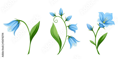 Photo Vector set of blue bluebell flowers isolated on a white background