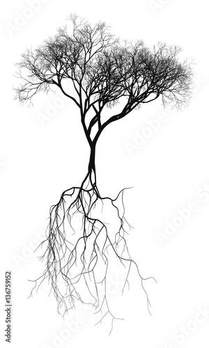 Black naturalistic bare tree with root system - vector illustration Wallpaper Mural