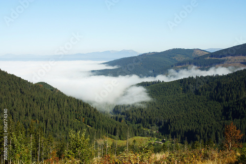 Photo  Scenery from upstairs on mountain and pine forest covered with fog landscape