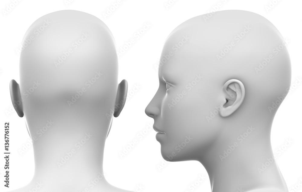 Fototapeta Blank White Female Head - Side and Back view