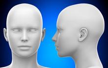 Blank White Female Head - Side...