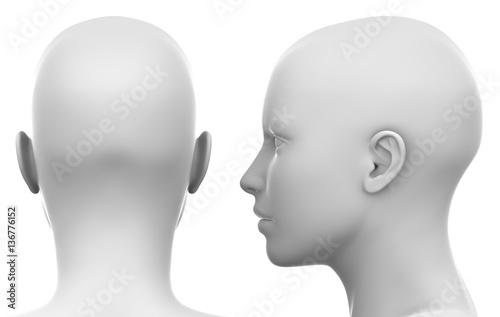 Fotografia Blank White Female Head - Side and Back view