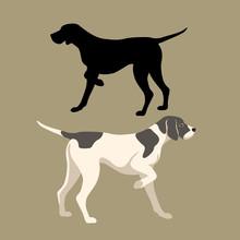 Pointer Dog Vector Illustratio...