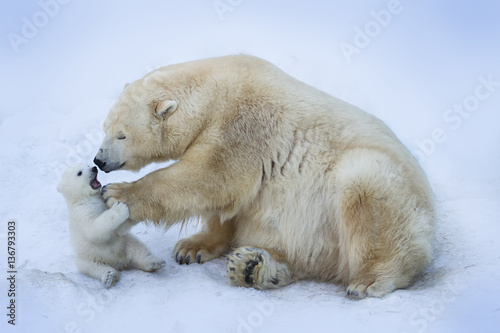 Spoed Fotobehang Ijsbeer Polar bear with mom