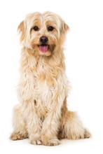 Sitzender Mischlingshund