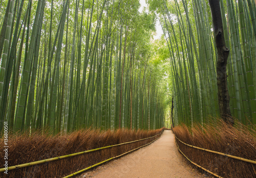 Kleiner Weg Im Bambus Wald Kyoto Japan Buy This Stock Photo And