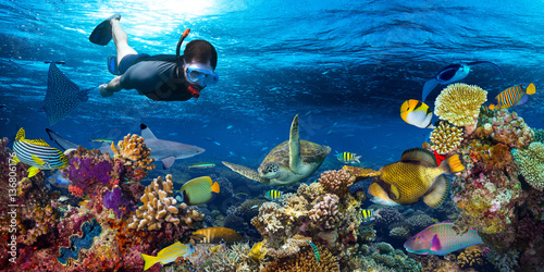 Poster Duiken young male snorkler exploring colorful underwater world coral reef with many fishes sea turtle shark snorkling background