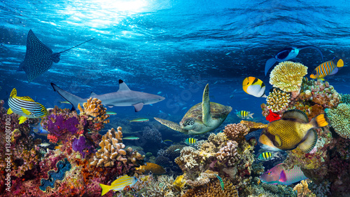fototapeta na drzwi i meble colorful 16to9 underwater coral reef panorama with many fishes turtle shark and marine life