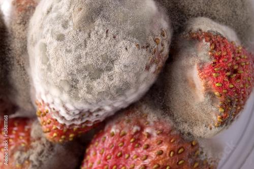 Fotografie, Obraz  fungus growth on strawberries