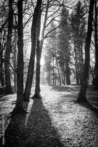 Obraz na płótnie Trees in a park with rays of light and shadows on the ground Black and white image