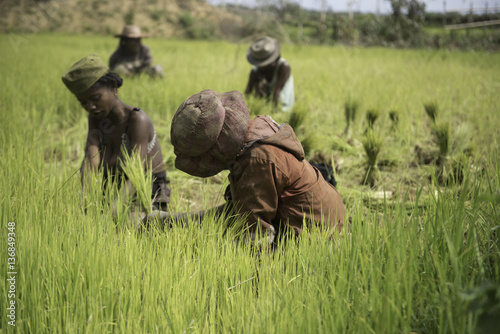 Fotobehang Rijstvelden rizière Madagascar