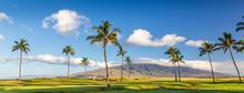 Palm Trees With View Of The West Maui Mountains, Maui, Hawaii