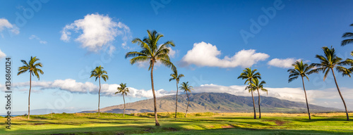 Poster Palmier palm trees with view of the west maui mountains, Maui, Hawaii