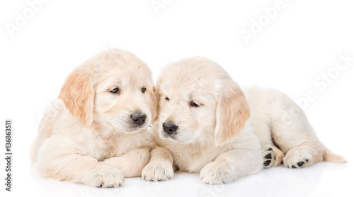 Spoed Foto op Canvas Hond Golden retriever puppies lying together. isolated on white