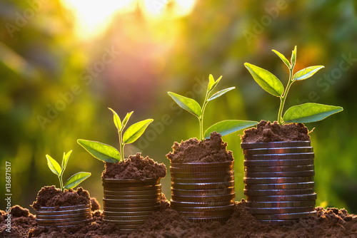 Foto Money growing concept,Business success concept, Tree growing on pile of coins mo