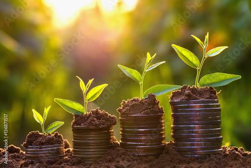 Fototapeta Money growing concept,Business success concept, Tree growing on pile of coins money obraz