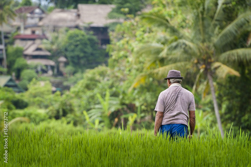 Foto op Plexiglas Indonesië Balinese Man in the Rice Fields of Ubud. A man working in the terraced rice fields during a glorious sunny day in the rural village of Ubud in central Bali, Indonesia.