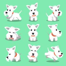 Cartoon Character White Scottish Terrier Dog Poses