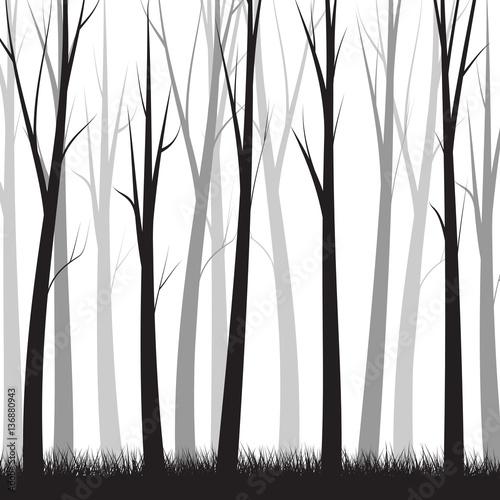 Papiers peints Blanc Simple Forest Background - vector illustration