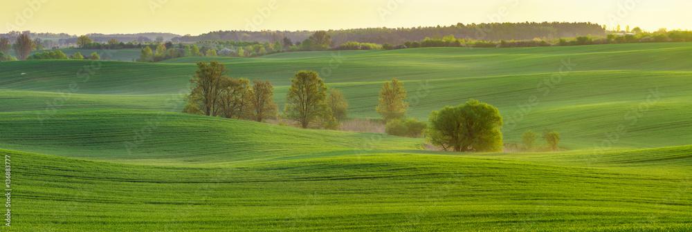 Fototapeta panorama Spring, green field against a blue sky
