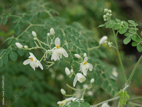 Fleurs Mourongs Jardin Creole La Reunion Buy This Stock Photo