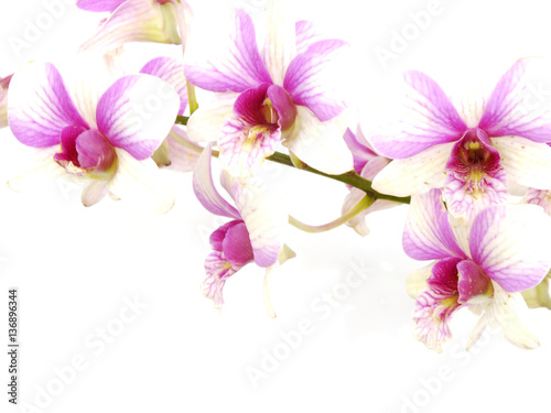 Poster Bloemen vrouw beautiful orchid isolated on white background