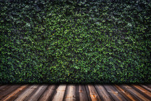 Green Leaves Wall With Wood Fl...