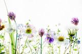 Fototapeta Kwiaty - spring flowers