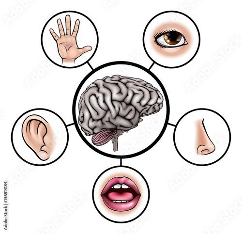 piec-zmyslow-mozgu