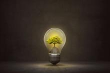 Small Tree Inside Light Bulb O...