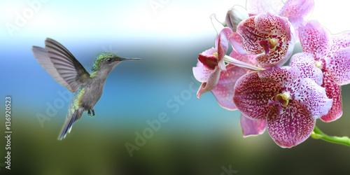 Photo  colibri