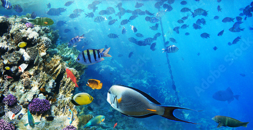 Poster Coral reefs Colorful coral reef fishes of the Red Sea.